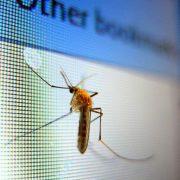 mosquito en el hogar