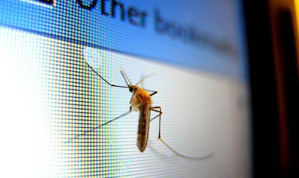 Las ocho claves para evitar tener mosquitos en casa - menos plagas