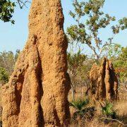 qué son las termitas