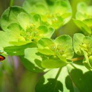 plantas contra plagas