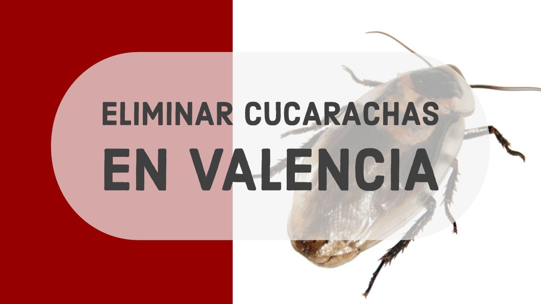 eliminar cucarachas en valencia