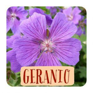 geranio