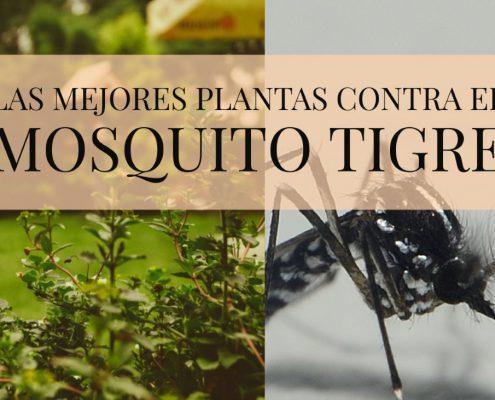 plantas contra mosquito tigre