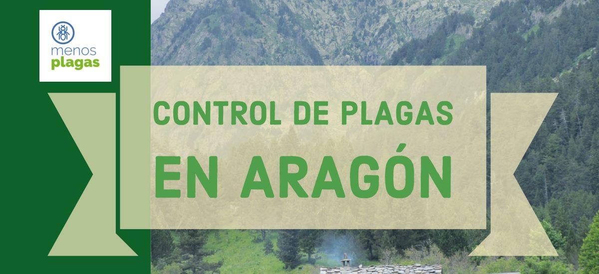 control de plagas en aragón